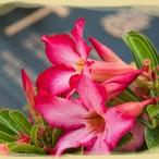 flowers-marker1a