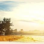 meadow1a